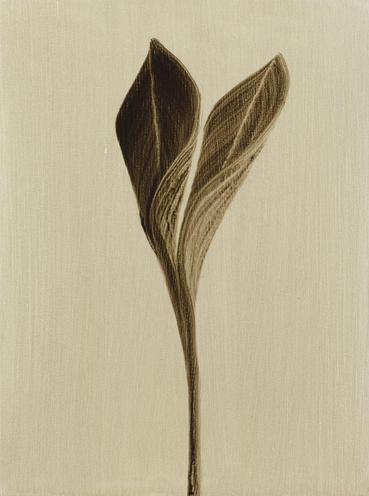 Ash Flora, Oil on canvas 40x60cm, 2016